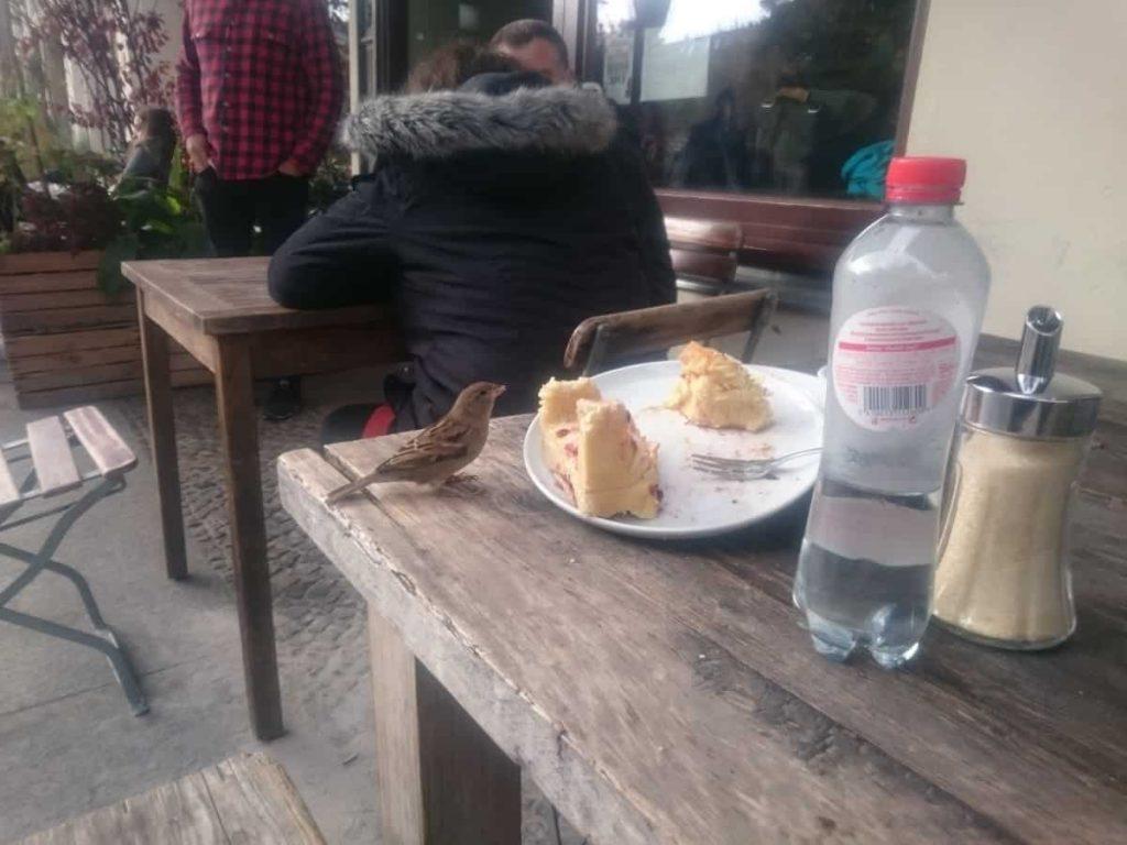 Fåglar äter frukost med oss
