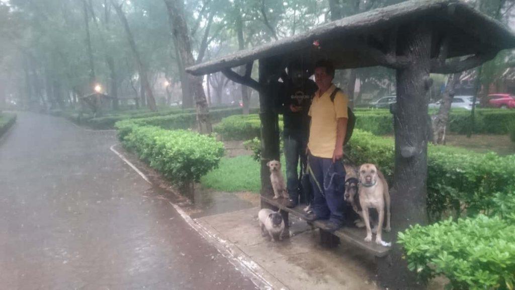 Regnig dag i Mexiko City (Parque Mexico)