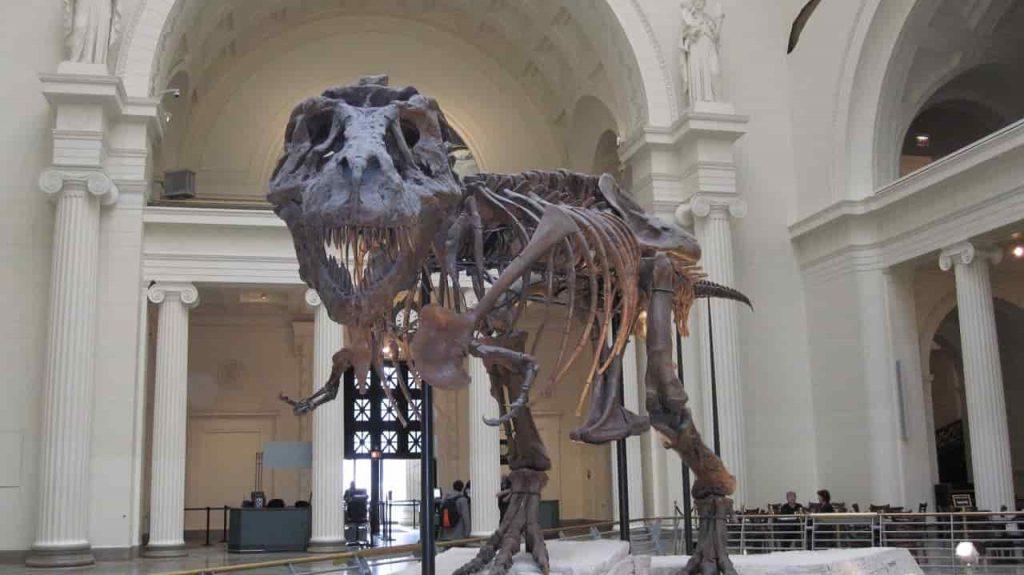 T-Rex på Field Museum i Chicago